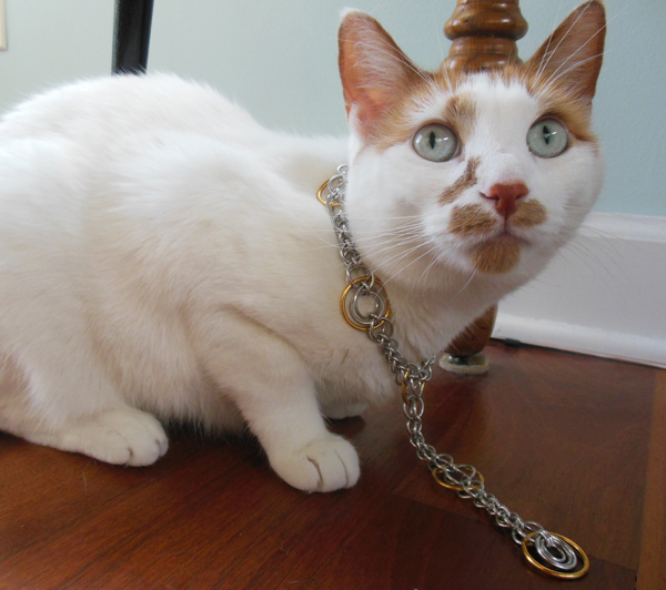 cat wearing chainmaille necklace
