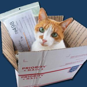 shipping-cat-dark-blue