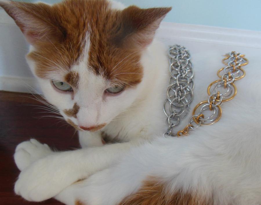 jewelry stuff on my cat zeela
